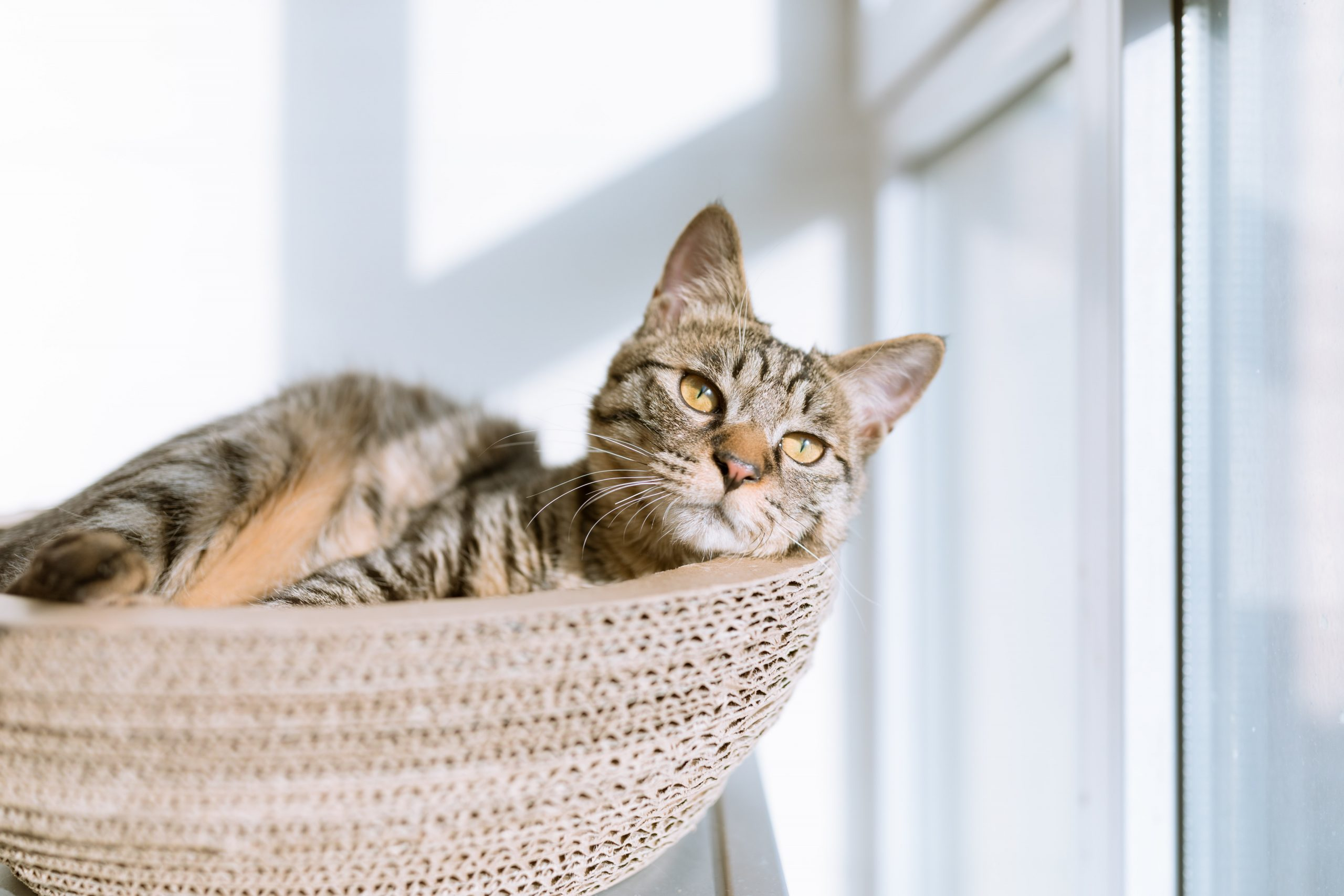What To Do If Your Cat Is Stressed During Quarantine